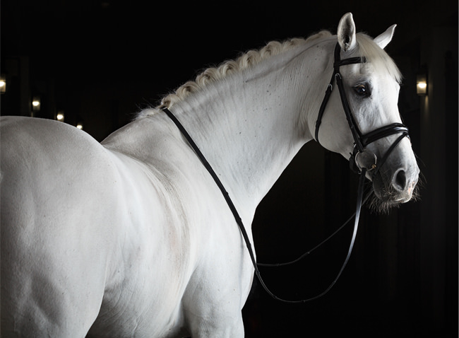 Grooming Your Horse With His Comfort In Mind